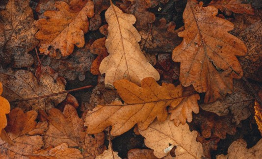 Free fall bereavement newsletter